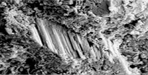 microscopic image of polymer modified mortar